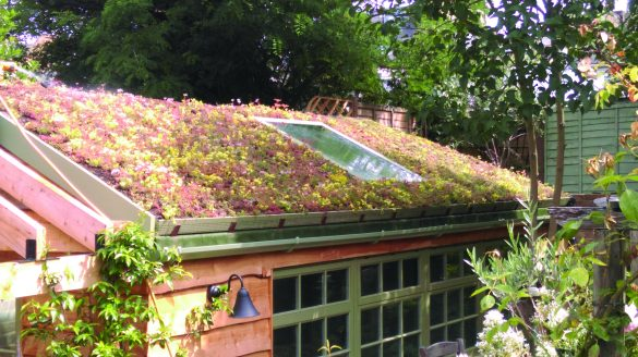 Green roofing is more than just planting flowers on a roof!